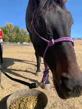 Load image into Gallery viewer, Happy Theo the horse with his favorite sprout pellet feed. Helps him stay as healthy as a horse.