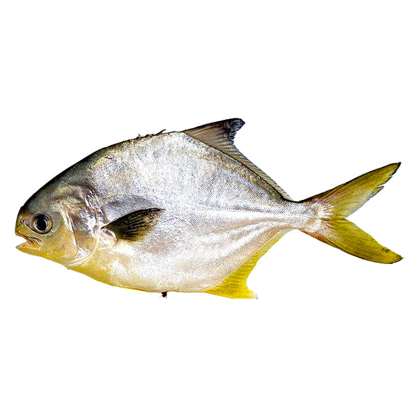 Golden Pompano Whole Clean, 1Lb Or Bigger
