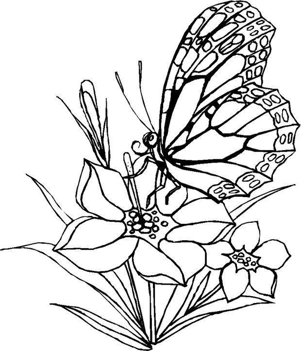 Flower and Butterfly Coloring Page