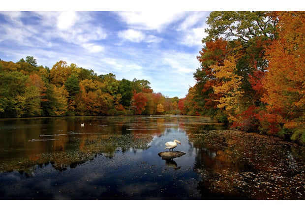 Scenic Autumn Lake 5D Diamond Painting Kit