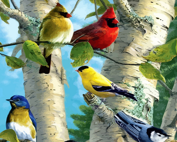 Birds Paint By Numbers Kit