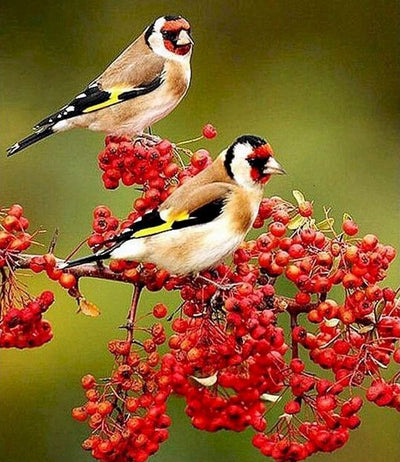 Red Flowers With Birds Paint By Number