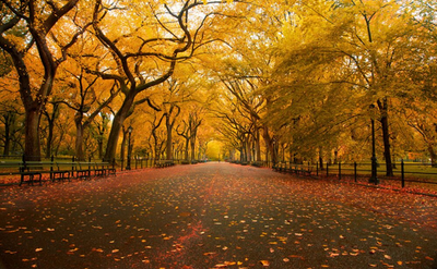Scenic Autumn Park 5d Diamond Painting Kit