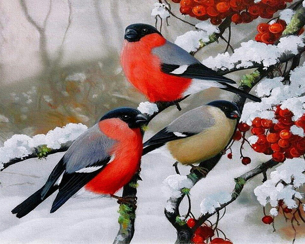 Winter Birds Paint By Numbers Kit