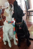 Dog Collar Flat or Martingale Deluxe & Optional Bringsel Black/Multicolored Paws