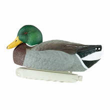 Load image into Gallery viewer, Cupped Waterfowl Finishing Mallards, 12pk
