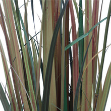 Load image into Gallery viewer, Flowering Native Fox Tail Grass 120 cm