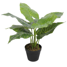 Load image into Gallery viewer, Artificial Potted Taro Plant / Elephant Ear 55cm