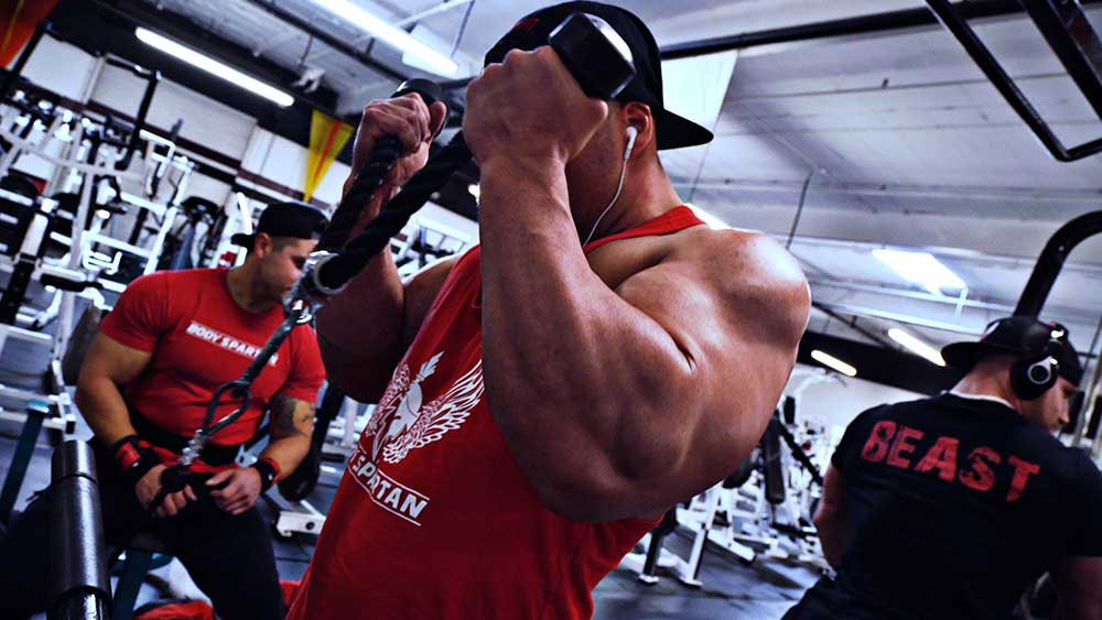Rope hammer curls for shoulder and arms workout