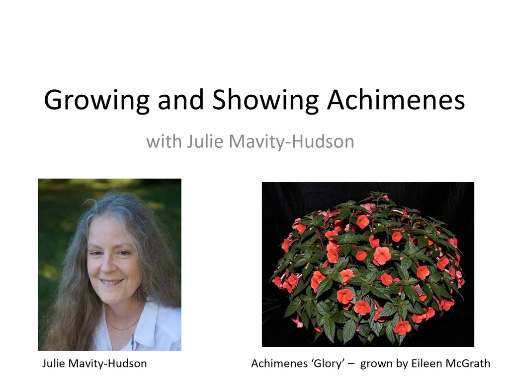 Webinar: Growing and Showing Achimenes