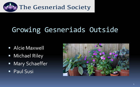 Webinar: Growing Gesneriads Outside