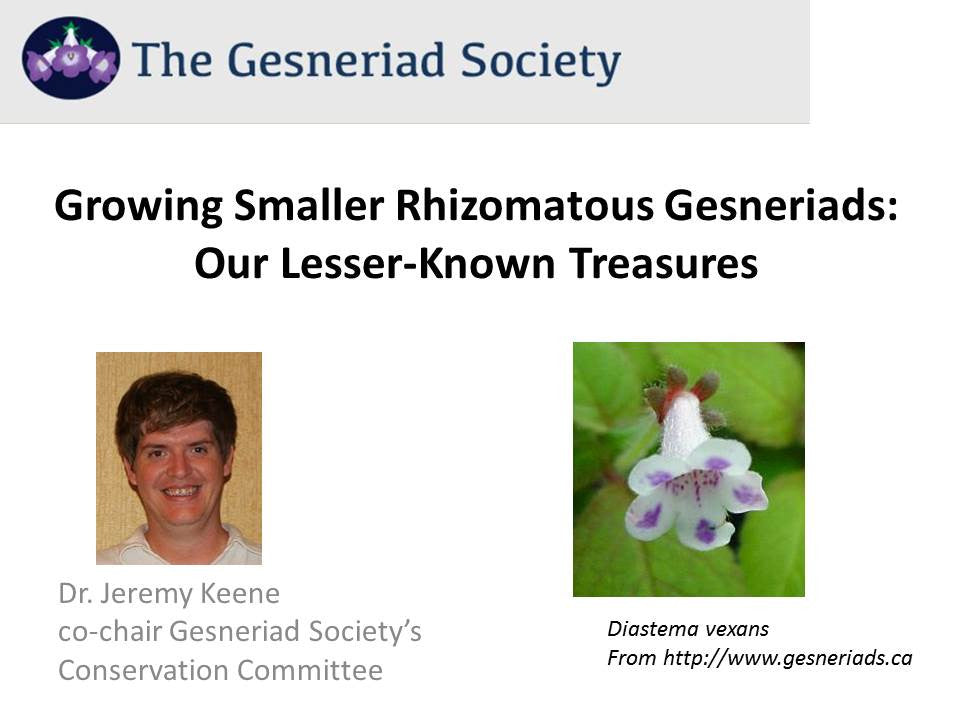 Webinar: Growing Smaller Rhizomatous Gesneriads - Our Lesser-Known Treasures