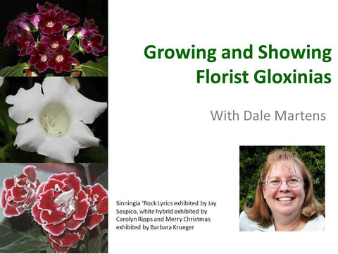 Webinar: Growing and Showing Florist Gloxinias