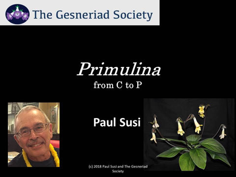Webinar: Primulina from C to P