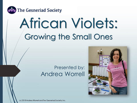 Webinar: African Violets - Growing the Small Ones