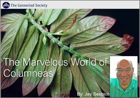 Webinar: The Marvelous World of Columneas