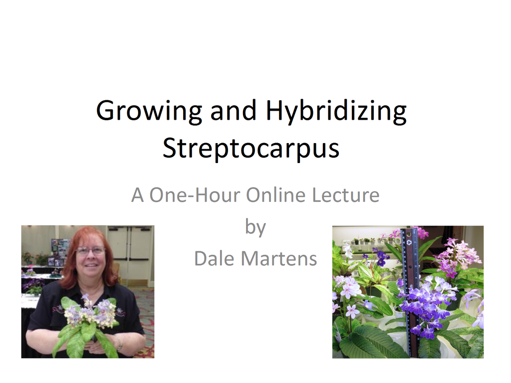 Webinar: Growing and Hybridizing Streptocarpus (Download)