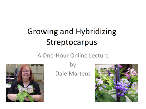 Webinar: Growing and Hybridizing Streptocarpus