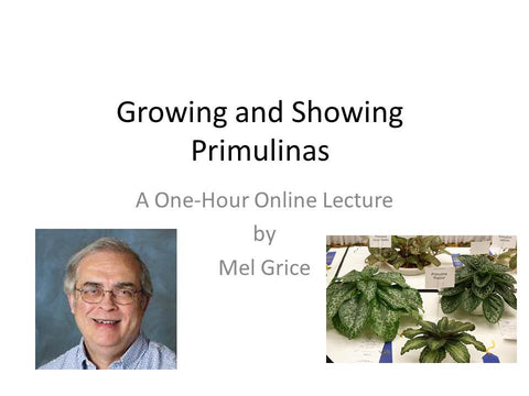 Webinar: Growing and Showing Primulinas