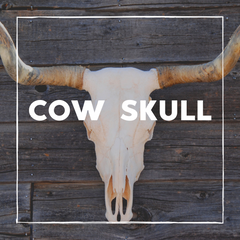 Cow Skull - Decor