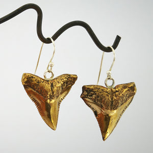 Bronze shark teeth earrings hang on silver hooks. By Keri-Mei Zagrobelna