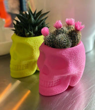 Load image into Gallery viewer, QEEBOO | Mexico XS - Pen Holder & Planter - (Multiple Finishes Available)