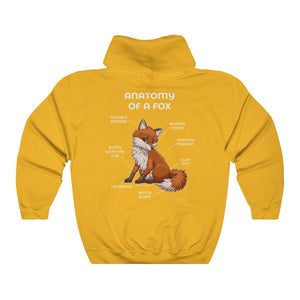 Anatomy of a Fox - Red