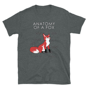 Anatomyy of a Fox (Red)