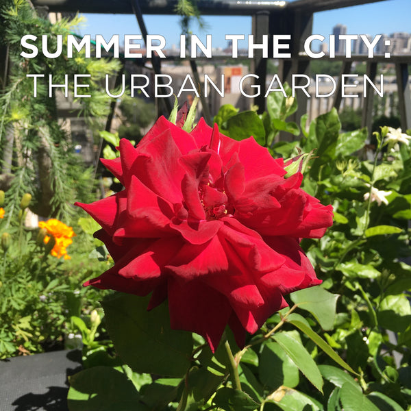 Maria's Urban Garden: Inspiration for Bringing Natural Beauty into the City