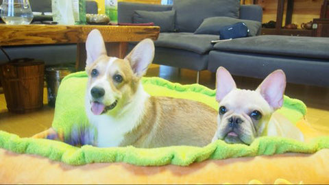 Two Dogs in a Hotdog Bed
