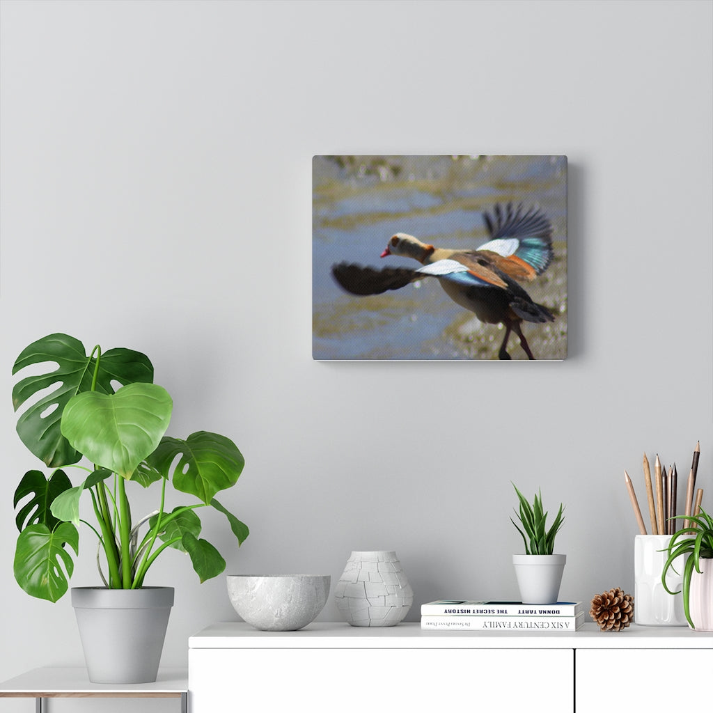 Egyptian Goose Canvas Wall Art - Cluedshopperclothing