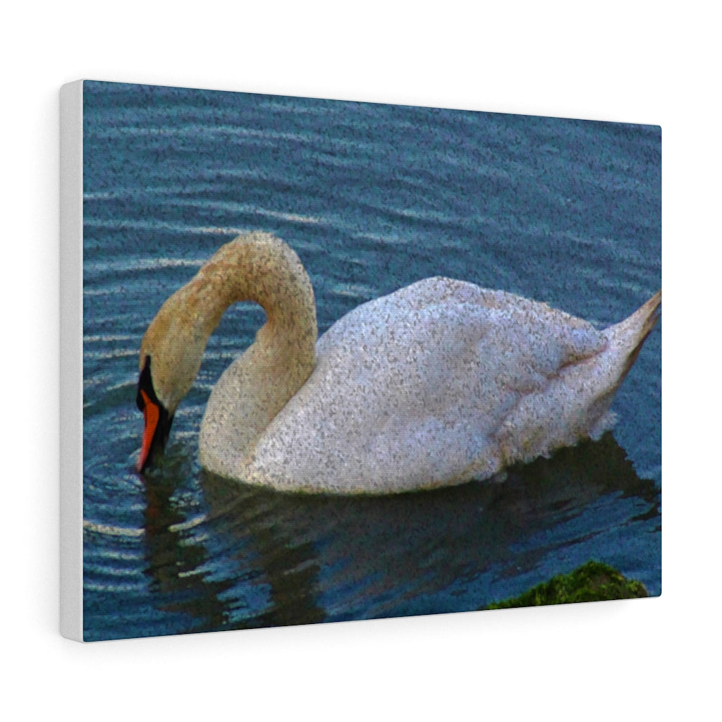 Swan Canvas Wall Art - Cluedshopperclothing