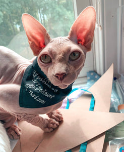 "Sphynx cat wearing custom bandana ""wrinkles against racism."""
