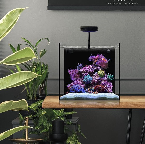 All About Nano Tanks