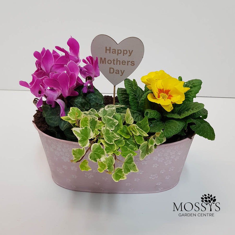 Mothers Day Planted Trough