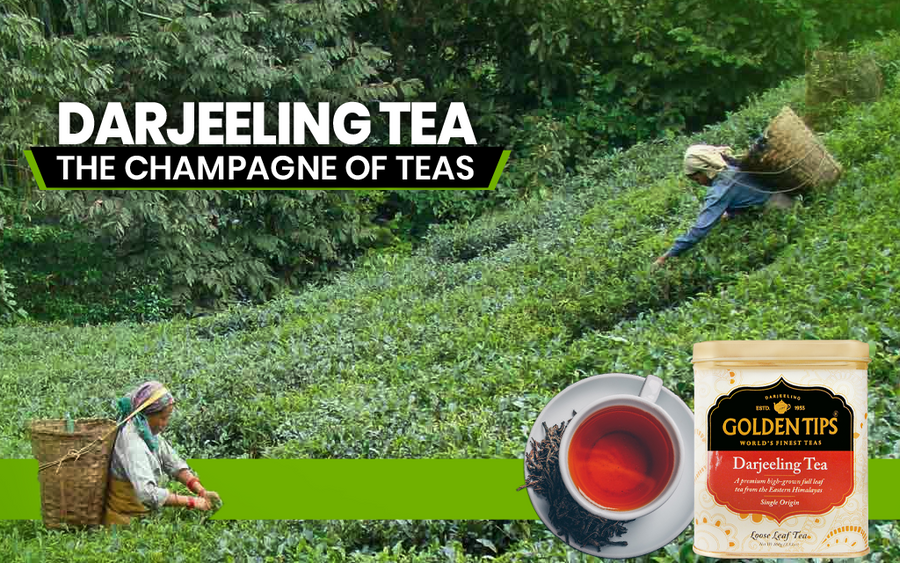 Why Darjeeling Tea Is Called the Champagne of Teas