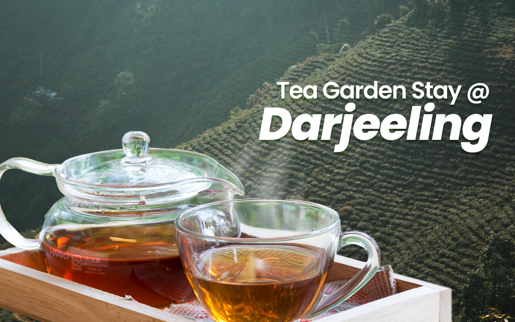 Tea garden stay darjeeling