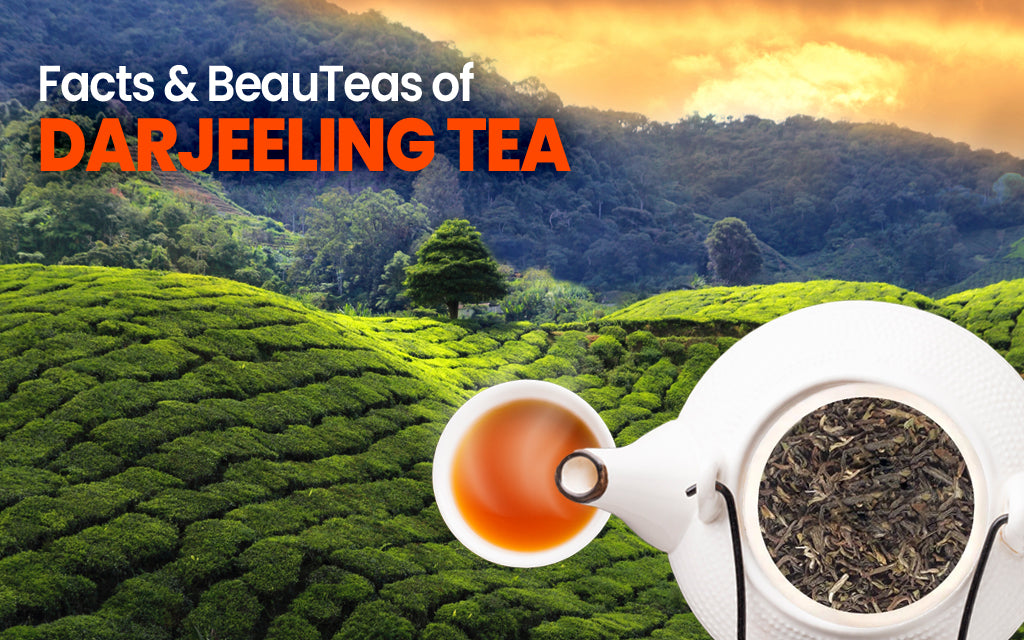 facts & beauteas of darjeeling tea