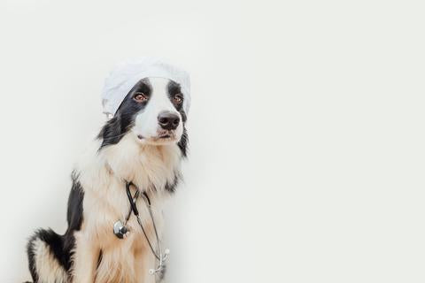 Dogs trained to detect COVID19 - Béjar masks - Surgical masks - Dogs and COVID