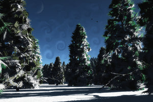Snow covered fir trees with a blue sky and crescent moon.