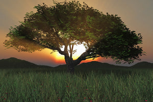 Sunset Tree 2020