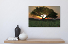 Load image into Gallery viewer, Sunset Tree 2020