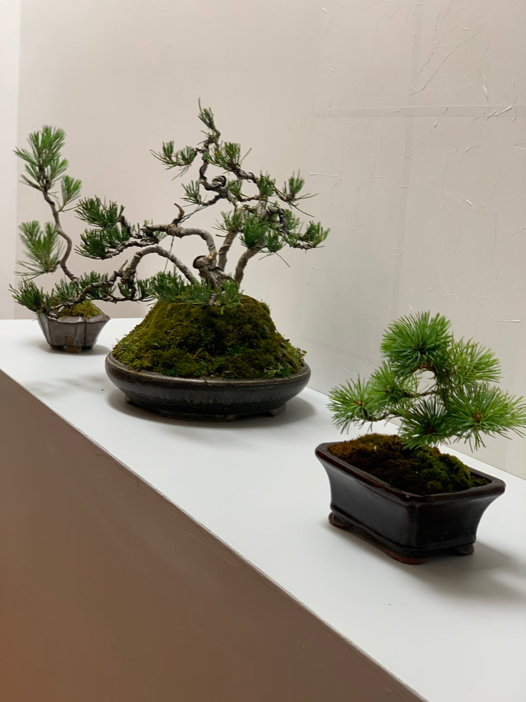 Bonsai Workshop With Kristen Calder's Pot