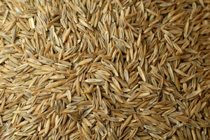 Johnsons Lawn Seed With Rye