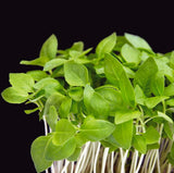 Sweet Basil Microgreen Seeds