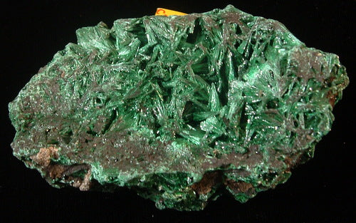 Fibrous Malachite - Katanga Province Democratic Republic of Congo - MS-2754b