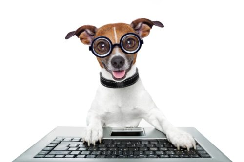 Dog wearing glasses using a laptop