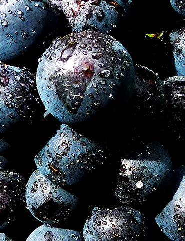 The grapes behind 5-star Pegasus Bay Pinot Noir