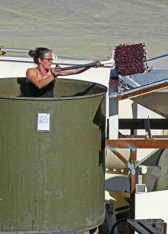 Woman power! Marie, assistant winemaker at Pegasus Bay, unloads Pinot Noir skins from a vat following fermentation.