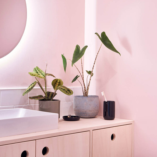 plantes vertes salle de bain sweet jungle